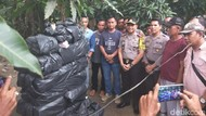 Tangkap 2 Bandar, Polisi Temukan 240 Kg Ganja di Sumut