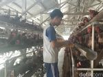 Ini Penyebab Kenaikan Harga Daging dan Telur Ayam di Garut
