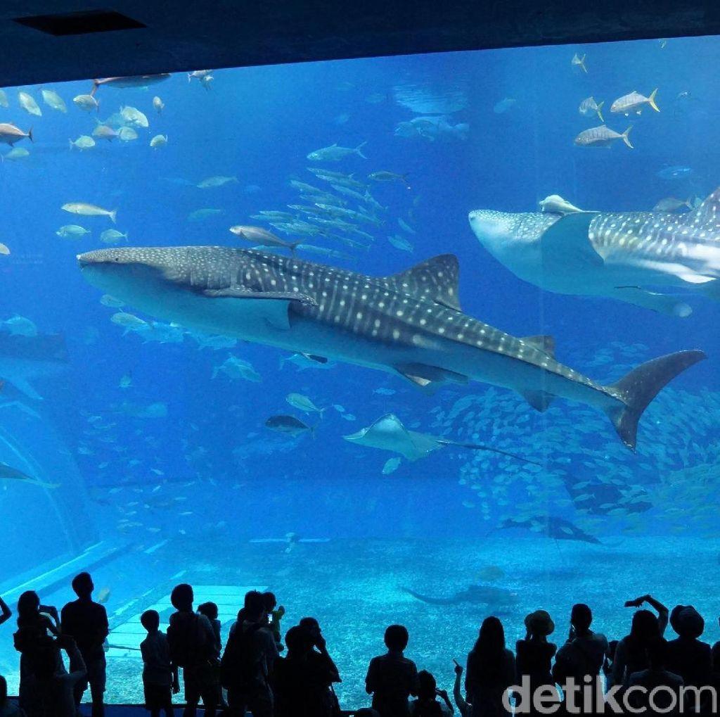 Melihat Akuarium Terbesar Dunia dari Jepang