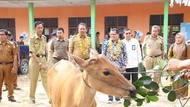 Berikan 330 Ekor Sapi, Kemendes PDTT Dorong Transmigran Produktif