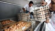 Bahas Harga Telur, Mendag Rapat Bareng Pejabat hingga Pengusaha