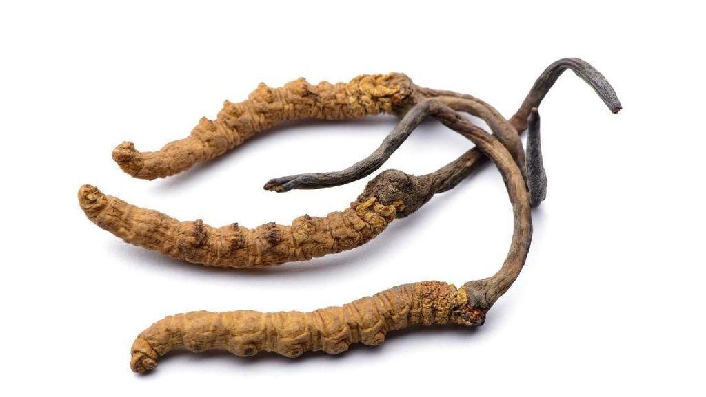 Mengenal Yarsagumba, Parasit Obat Kuat yang Dijuluki Emas Himalaya