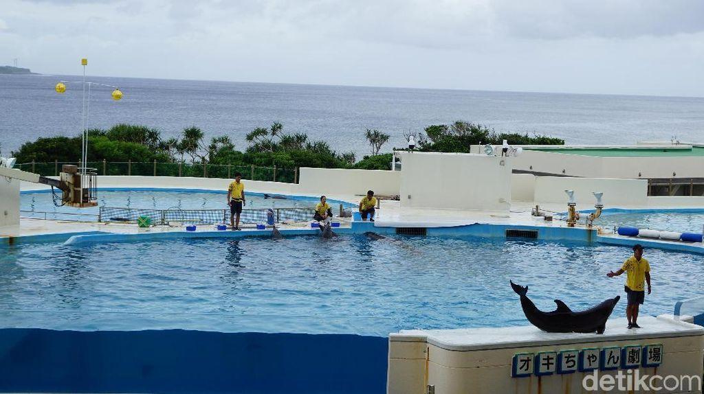 Foto: Lumba-lumba Lincah dari Jepang