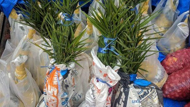 25 pohon kurma juga ikut diselundupkan