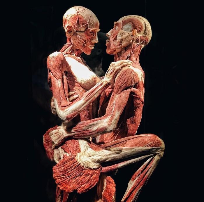 Body Worlds pertama kali didirikan oleh ahli anatomi Jerman Dr Gunther von Hagens. Pada tahun 1977 ia menemukan teknik plastinasi di mana jenazah diawetkan dengan plastik. (Foto: Instagram)