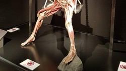 Body Worlds adalah museum berisi koleksi jenazah manusia yang sudah diawetkan. Tujuannya untuk memberikan edukasi kesehatan terutama anatomi manusia.