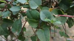 Banyak tanaman yang mungkin ada di sekitar kita bisa dimanfaatkan untuk membantu tubuh kita mencegah penyakit, seperti berikut ini.
