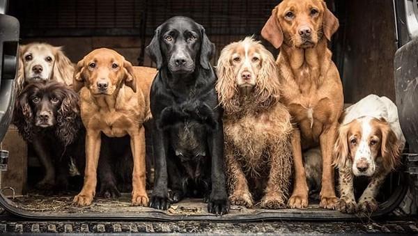 Saat ini, ada 138 ras anjing yang diakui secara resmi. (Tracy Kidd)