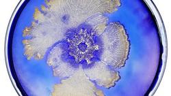 Ilmuwan Tal Danino sehari-harinya meneliti bagaimana cara memanfaatkan bakteri untuk kebaikan manusia. Di masa senggang ia suka menciptakan karya seni.