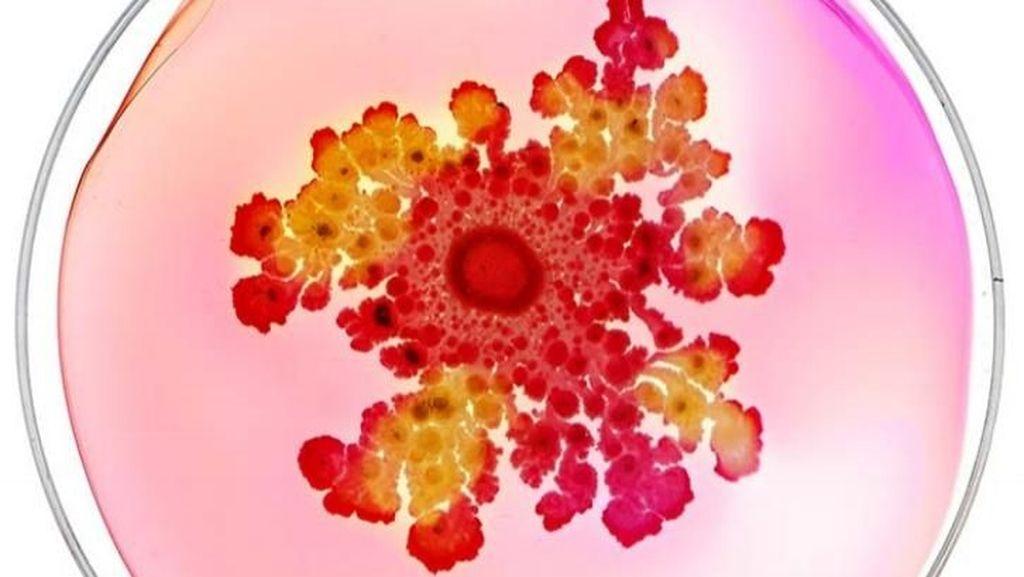 Ketika Koloni Bakteri di Atas Cawan Petri Diubah Jadi Karya Seni Indah