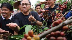 Akhir Pekan, Zulkifli Hasan Sibuk Panen Kopi di Lampung