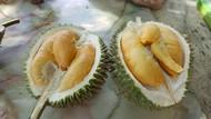 Durian Boleh Masuk Kargo Pesawat, Asalkan...