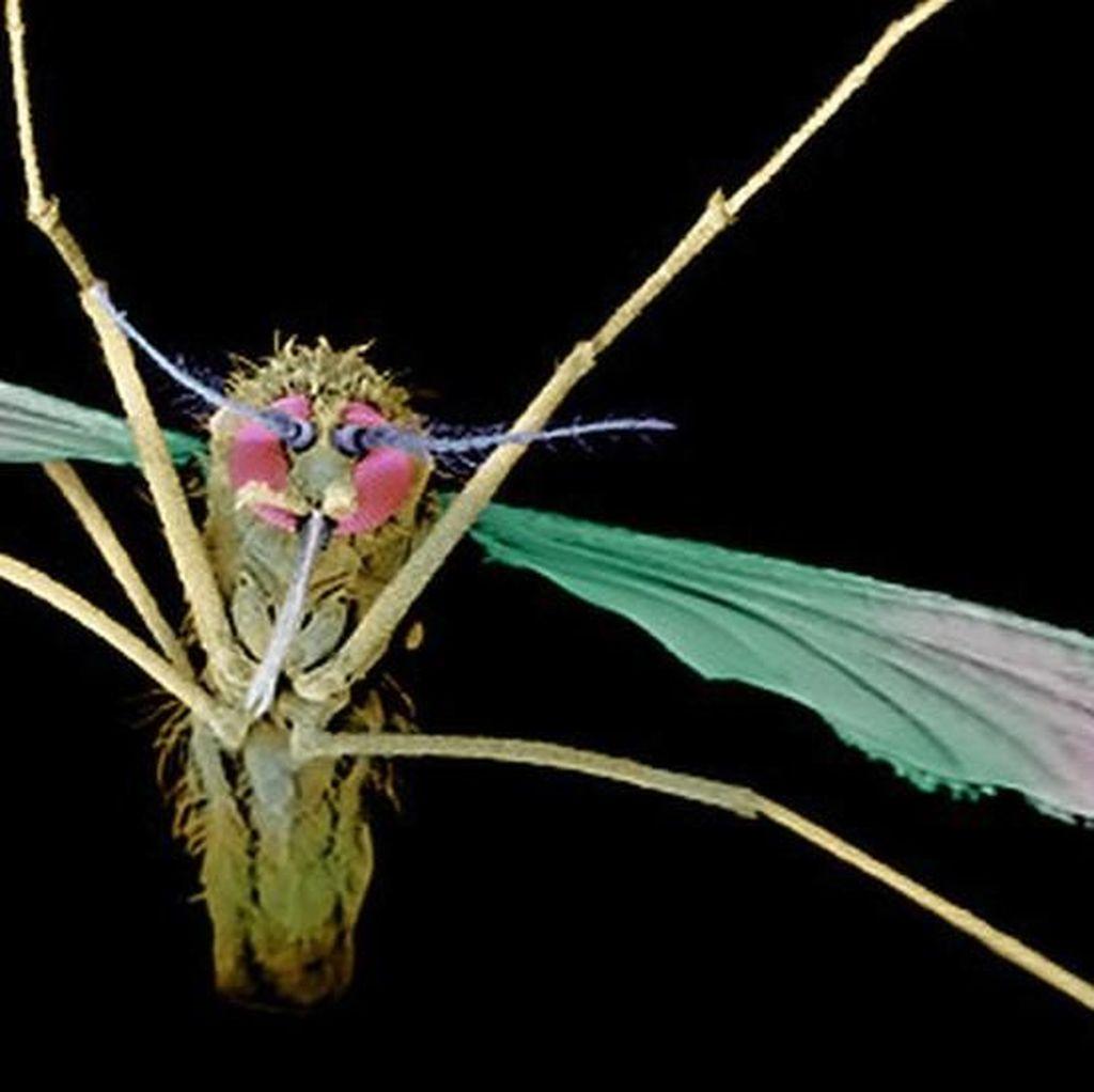 AS Loloskan Obat Fenomenal yang Bisa Sembuhkan Malaria Kambuhan