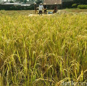Sistem Perizinan Online Bisa Genjot Investasi di Sektor Pertanian
