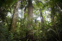 Hutan Amazon yang sangat lebat (Reuters)