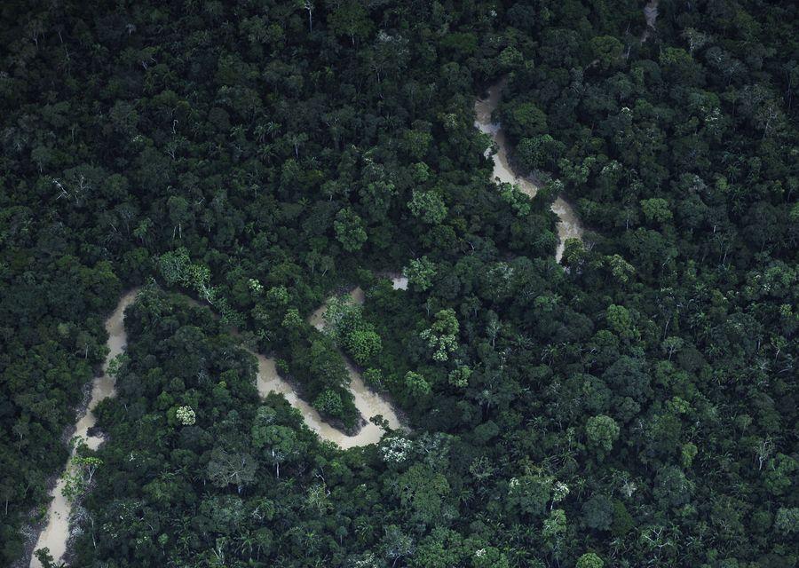 Amazon merupakan hutan belantara dengan luas 7 juta km persegi. Lokasinya di Benua Amerika Latin dan masuk di 9 negara, dari Brasil (60 persen hutan Amazon ada di negara ini) lalu Kolombia, Peru, Venezuela, Ekuador, Bolivia, Guyana, Suriname, dan Guyana Perancis (Reuters)