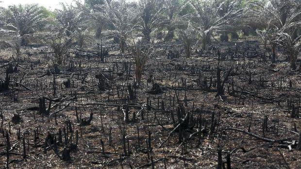 25 Perusahaan Sawit Gunduli Hutan RI 2 Kali Luas Singapura
