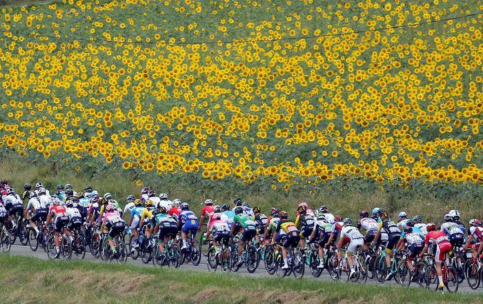 Peserta Tour de France melintasi hamparan bunga berwarna kuning. REUTERS/Stephane Mahe.