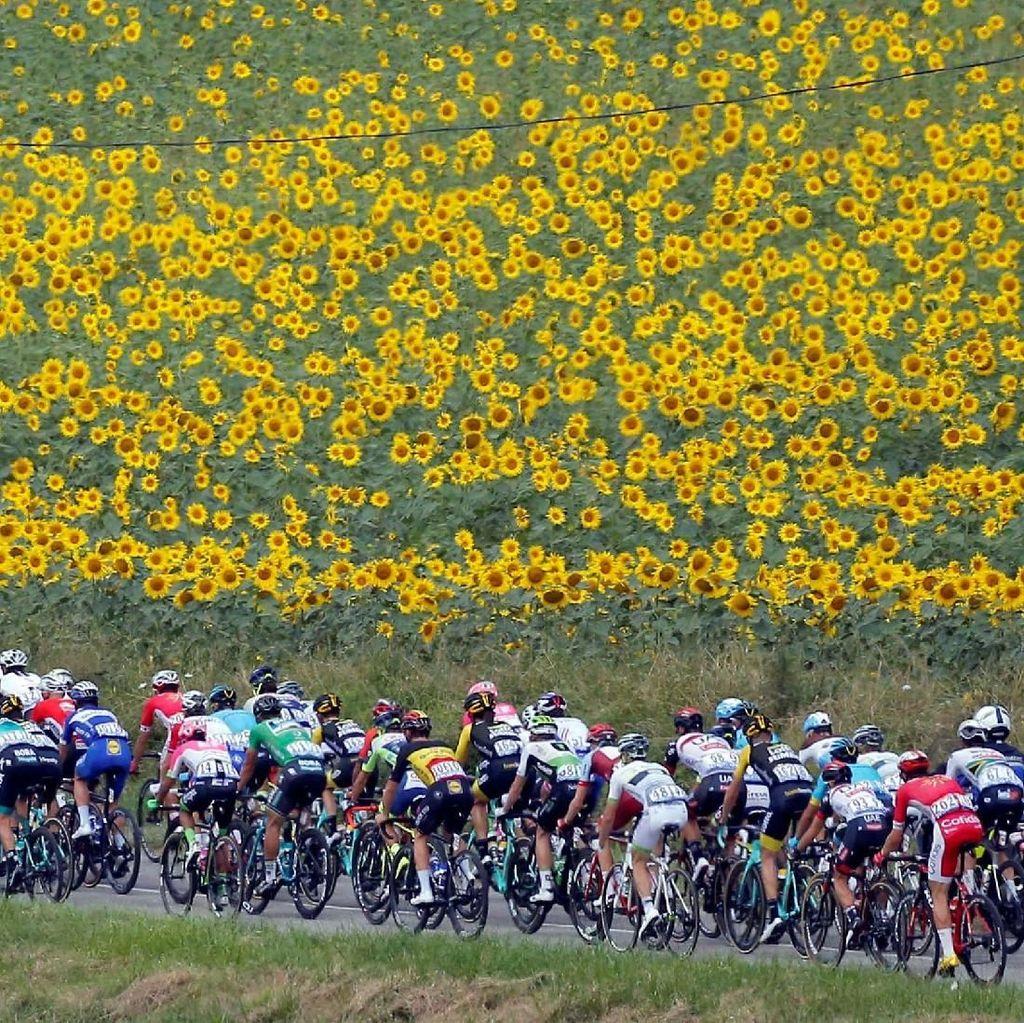 Indahnya Kebun Bunga Manjakan Peserta Tour de France