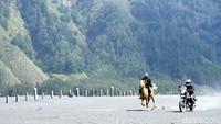 Foto: Meski perawakannya terlihat kecil, tapi kuda Bromo tidak bisa dianggap remeh. Kecepatannya bisa diadu dengan motor! (Wahyu/detikTravel)