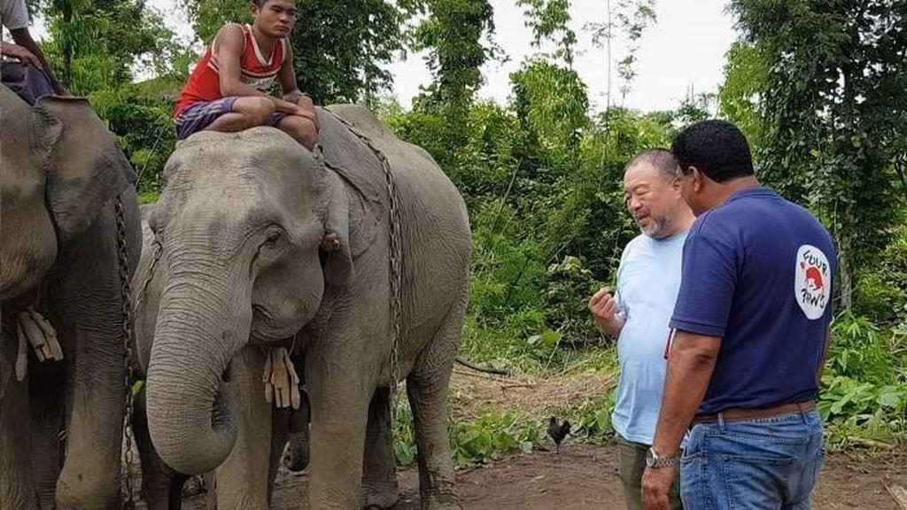 Di Myanmar, Gajah Pengangguran Akan Direhabilitasi