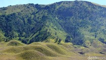 Hijau Bak Permadani, Begini Cantiknya Bukit Teletubbies Bromo