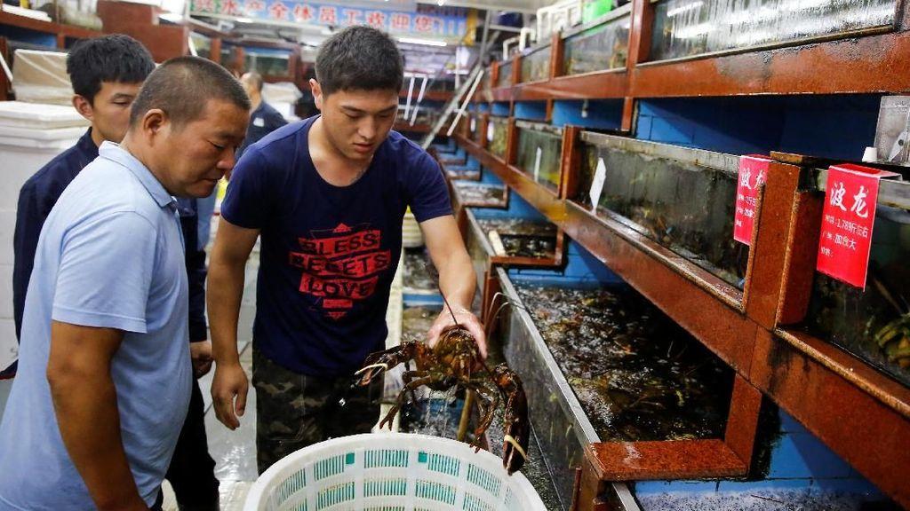 Eksportir Lobster di AS Mulai Terkena Dampak Perang Dagang