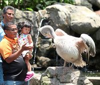 Business Trip ke Kuala Lumpur? Jangan Lupa Lihat 3.000 Burung