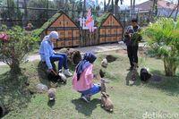 Bermain bersama kelinci