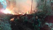 Video Petugas Berjibaku Padamkan Api di Lahan Gambut Jambi