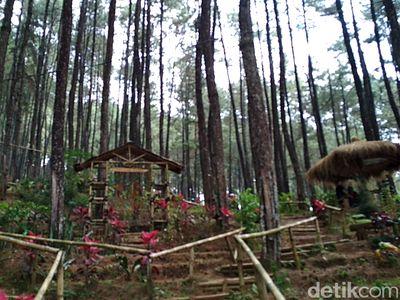 Hutan Pinus Blitar yang Bikin Tenang dan Damai