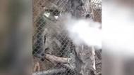 Heboh Monyet di Batu Secret Zoo Disemprot Vape