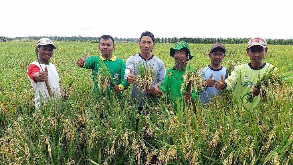 Kementan Cetak Sawah Baru 8.000 Hektar di Marauke Sejak 2015