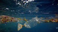 Makan Ikan Biar Pintar, Kalau Ikan Mengandung Plastik Bagaimana?