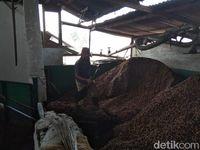 Begini Proses Pengolahan Biji Kopi di Pabrik Kopi yang Berusia Seabad