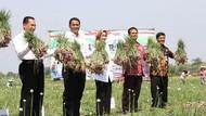 Bawang Merah Ekspor, Mentan: Dunia Apresiasi Pertanian RI