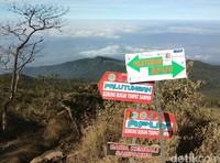 Plang petunjuk Jalur Apuy dan Palutungan. Bunga Edelweiss bak permadani ini bisa dijumpai dari mulai persimpangan Apuy hingga Goa Walet, di ketinggian sekitar 2.000 mdpl (Muhammad Idris/detikTravel)