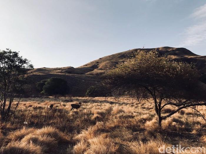 Gili Lawa di Taman Nasional Komodo. Foto: (Indah Novita Sari/detikTravel)