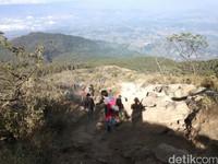 Para pendaki Gunung Ciremai. Edelweiss sangat dilarang keras untuk dipetik dan termasuk pelanggaran berat bagi pendaki (Muhammad Idris/detikTravel)