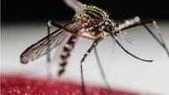 Berantas Demam Berdarah Sukses di Australia, Yogyakarta Target Selanjutnya