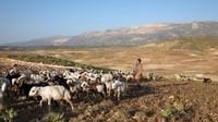 Kisah Orang-orang Nomaden Terakhir di Bumi
