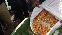 Jagung Impor Bakal Dijual ke Peternak Rp 4.000/Kg