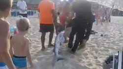 Seperti Film Meg, Hiu Nyasar di Pantai Mallorca Bikin Turis Panik
