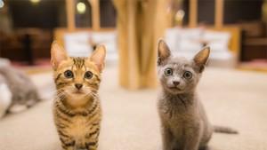Kucing Tertib! Mau Nyeberang Aja Nunggu Lampu Hijau Dulu Loh