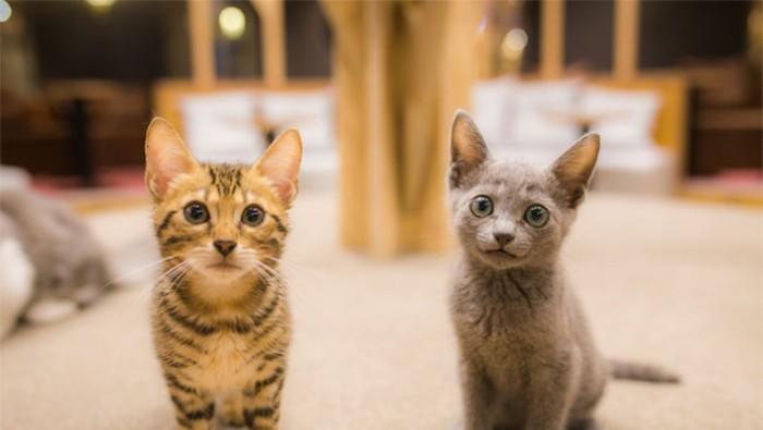 kafe kucing