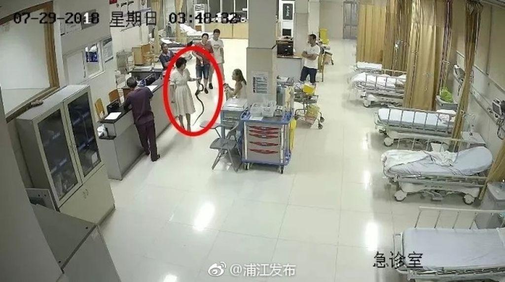 Bikin Heboh! Wanita Ini Bawa Ular yang Menggigitnya ke Rumah Sakit