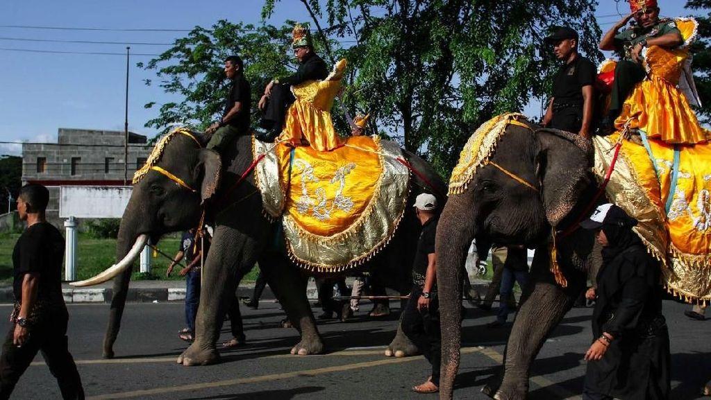 Aksi 4 Ekor Gajah di Pekan Kebudayaan Aceh