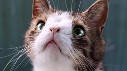 Siapa penyayang kucing? Kenalin nih Monty, sosok kucing menggemaskan yang terlahir dengan kelainan kromosom. Gemes banget sih lihatnya!