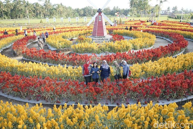Taman-taman bunga kini tengah hits dan menjadi buruan objek selfie di sejumlah tempat wisata, tak terkecuali di Magelang. Namanya Taman Ramadhanu (Pertiwi/detikTravel)