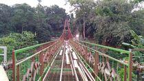 Menengok Pengganti Jembatan Indiana Jones yang Hampir Rampung